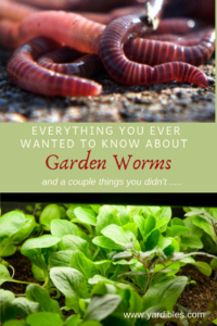 Everything you want to know about garden worms