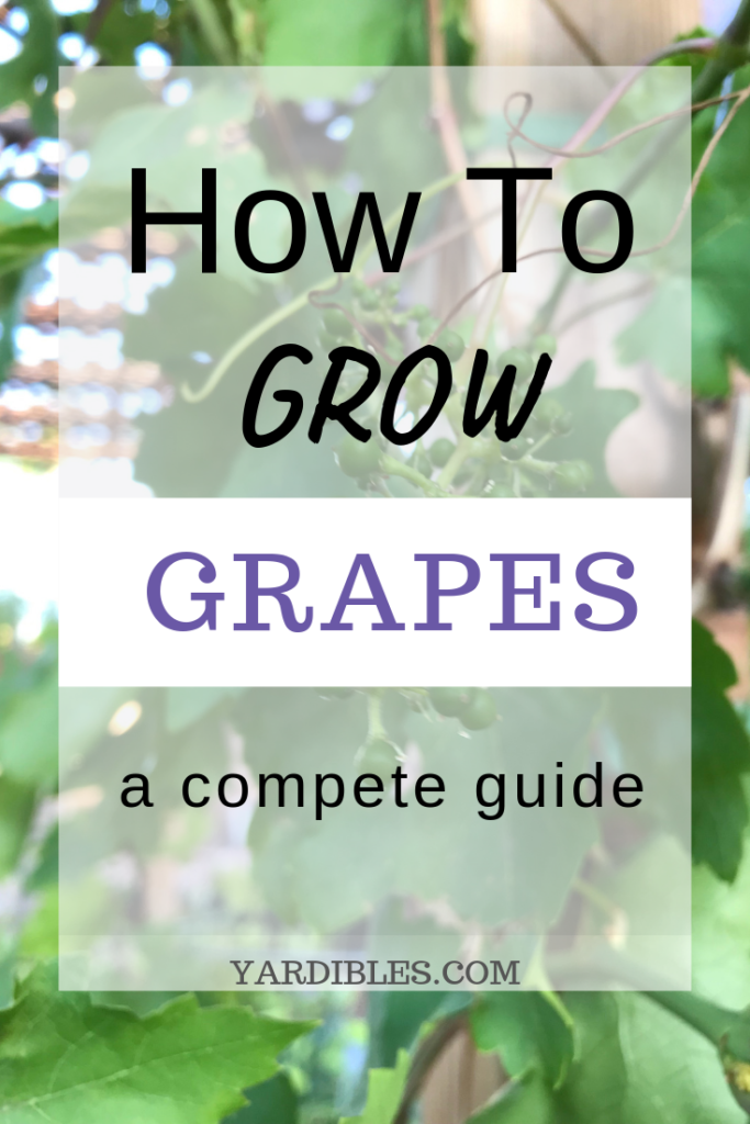 How to Grow Grapes - A complete Guide