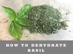 How to dehydrate basil from the garden