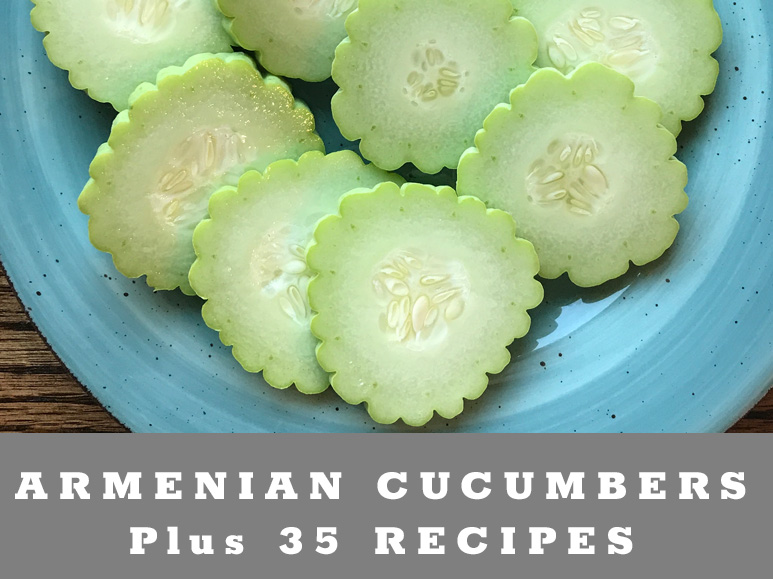 How to grow Armenian Cucumbers plus 35 cucumber recipes