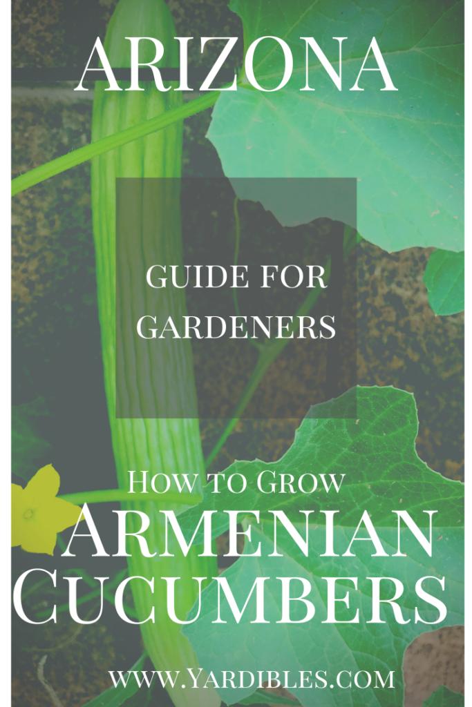 Guide for Gardeners - Armenian Cucumbers