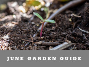 What to plant in Arizona in June