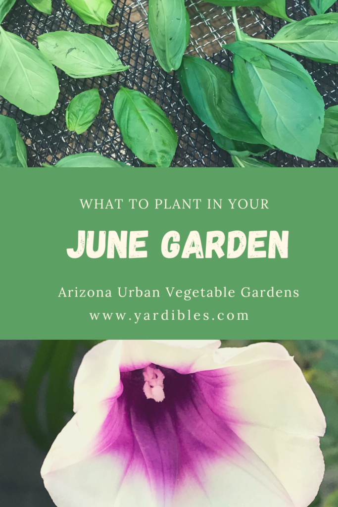 What To plant in June in your Arizona Garden
