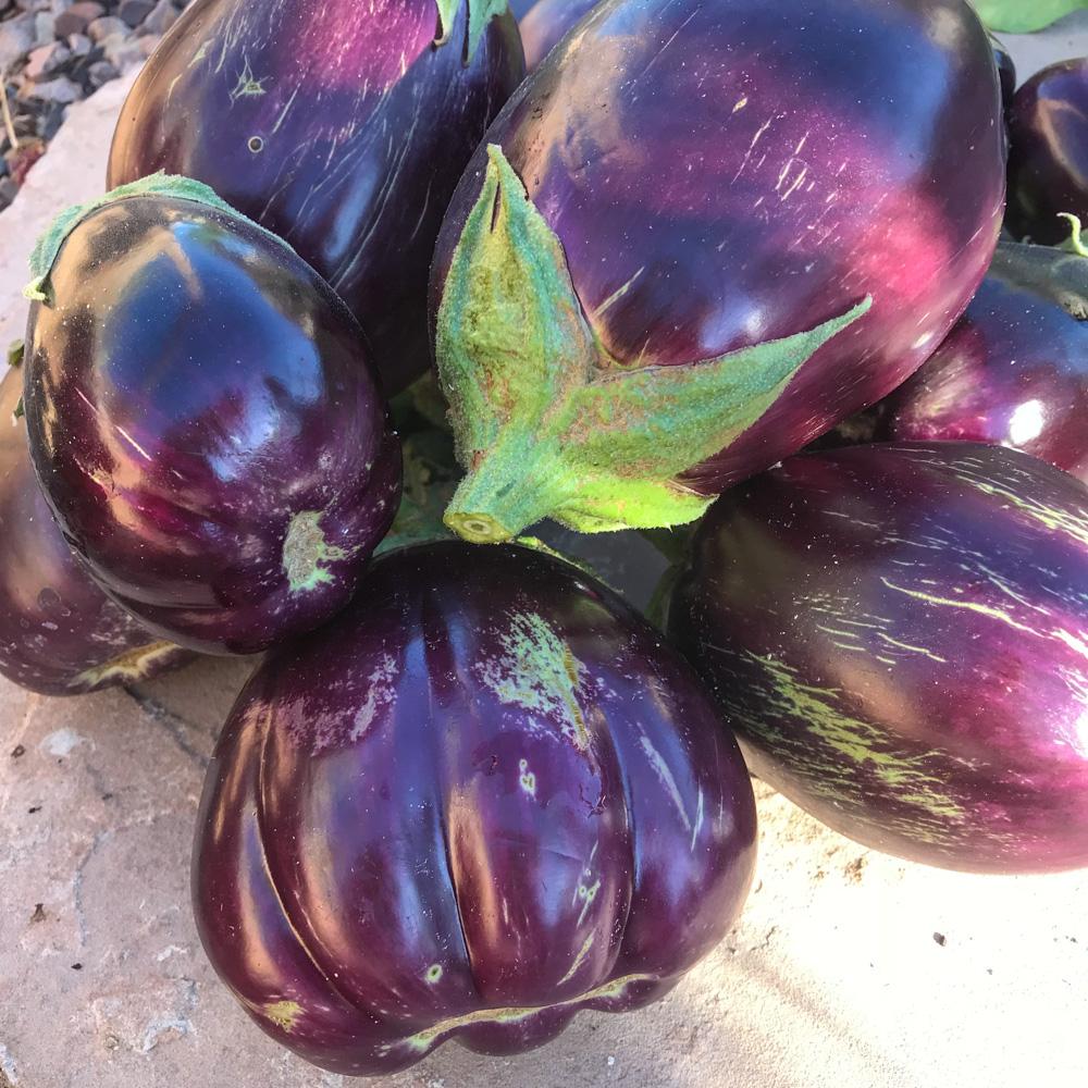Arizona garden eggplant harvest. Eggplant can be planted in July in Arizona.