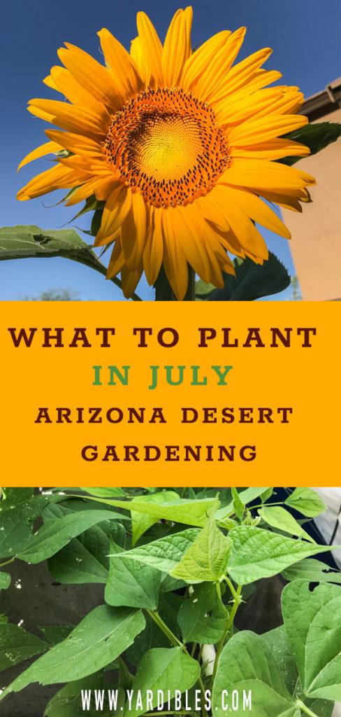 July Arizona Planting Guide