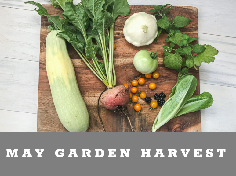 What we harvest in May from the desert garden