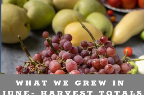 June Garden Harvest Totals - Urban Backyard Garden