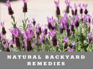 Natural Backyard Remedies