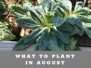What to plant in the low desert of Arizona in August