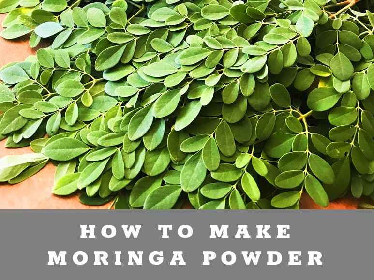 How to dehydrate Moringa Powder