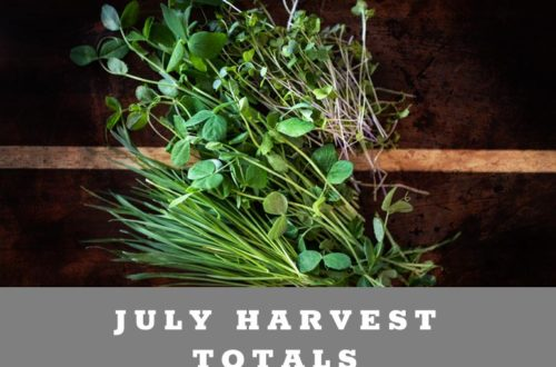 JULY Harvest Totals for a small backyard farm